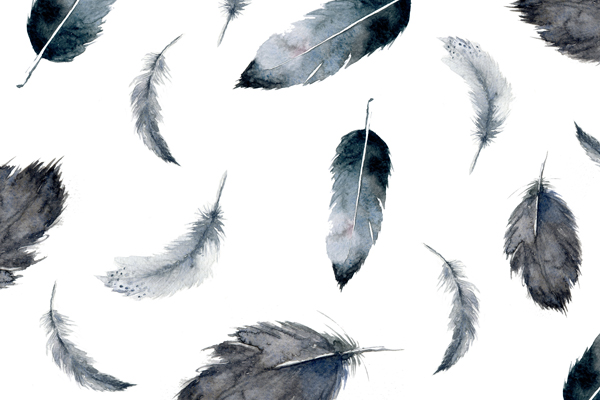 wallpapers-gratis-5-plumas